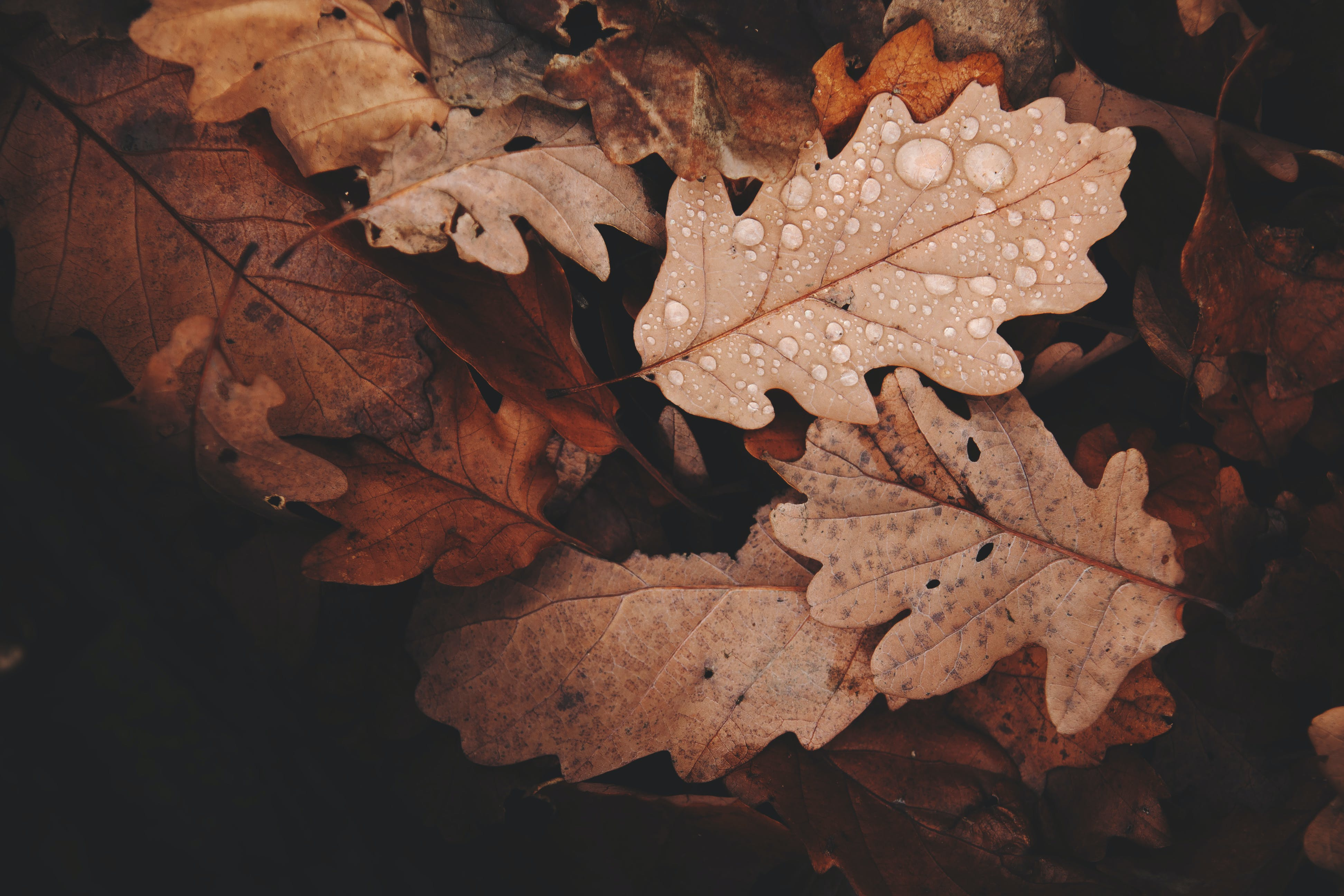 Kostenloses Stock Foto zu licht, natur, muster, textur