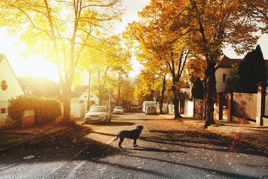 Dog on Concrete Road