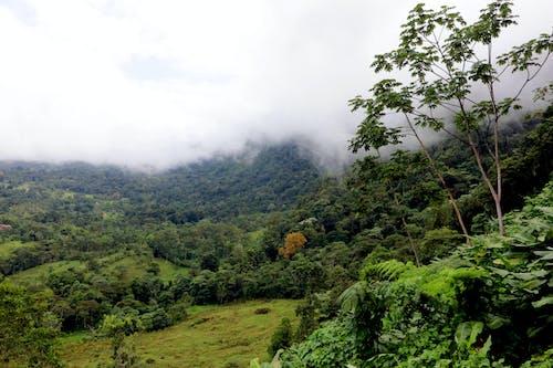 costarica, doğa, yağmur ormanı içeren Ücretsiz stok fotoğraf