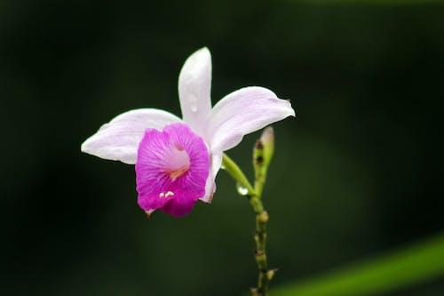 çiçek, costarica, doğa, güzel çiçekler içeren Ücretsiz stok fotoğraf