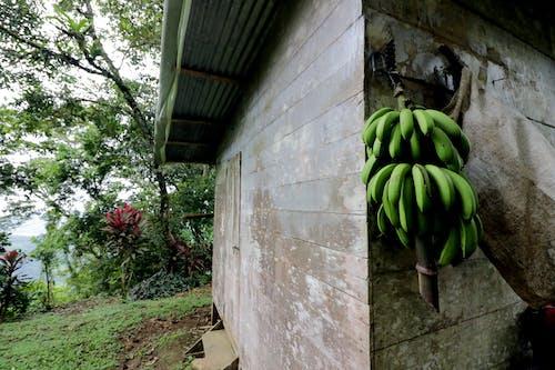 costarica, eski ev, yağmur ormanı içeren Ücretsiz stok fotoğraf