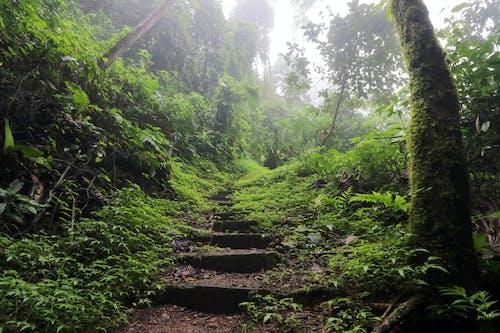 天性, 樓梯, 綠色, 雨林 的 免費圖庫相片
