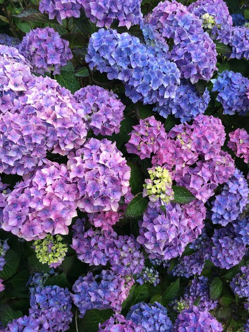 Fotos de stock gratuitas de azul, flores, lila