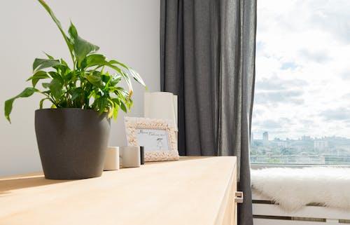 Photos gratuites de à l'intérieur, appartement, appui de fenêtre