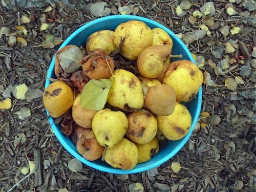 Δωρεάν στοκ φωτογραφιών με αχλάδια