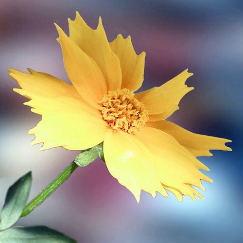 Δωρεάν στοκ φωτογραφιών με κίτρινο άνθος