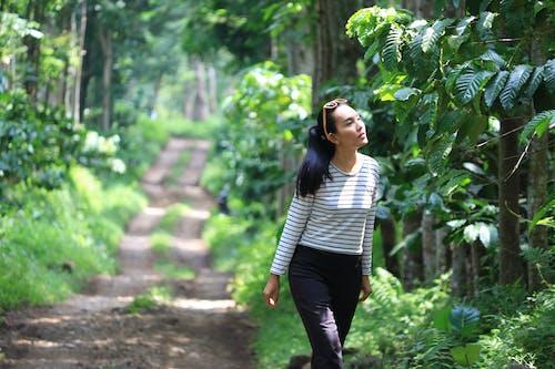 Free stock photo of coffee, girl, plantation
