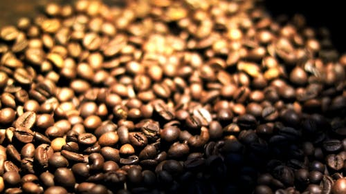 Free stock photo of coffee, roasted coffee beans, robusta