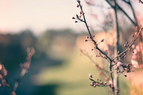 Ảnh lưu trữ miễn phí về bình minh, cánh hoa, đẹp, độ sâu trường ảnh