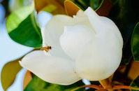 flower, bee
