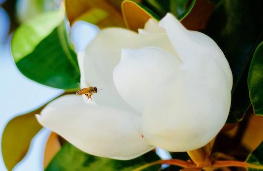 Free stock photo of flower, bee