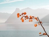 Orange Leaf Plant Near Sea and Mountains at Daytime
