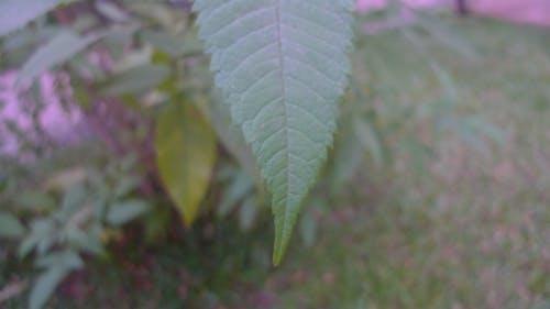 Free stock photo of dry leaf, green leaf