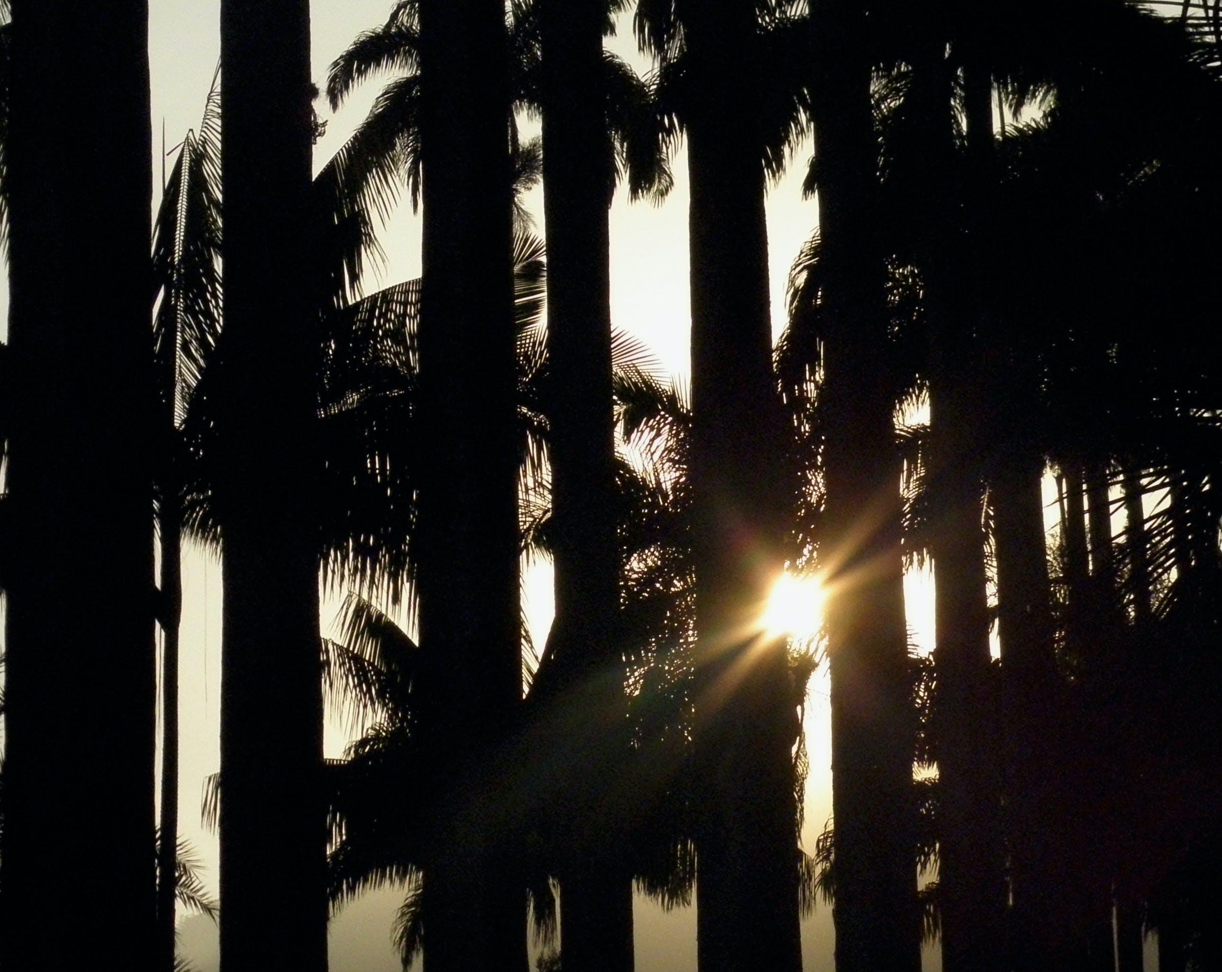 Free stock photo of nature, sun, trees
