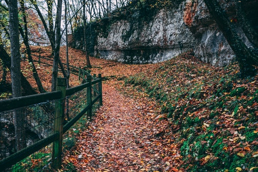 Black Steel Fence With Brown Leaves Under