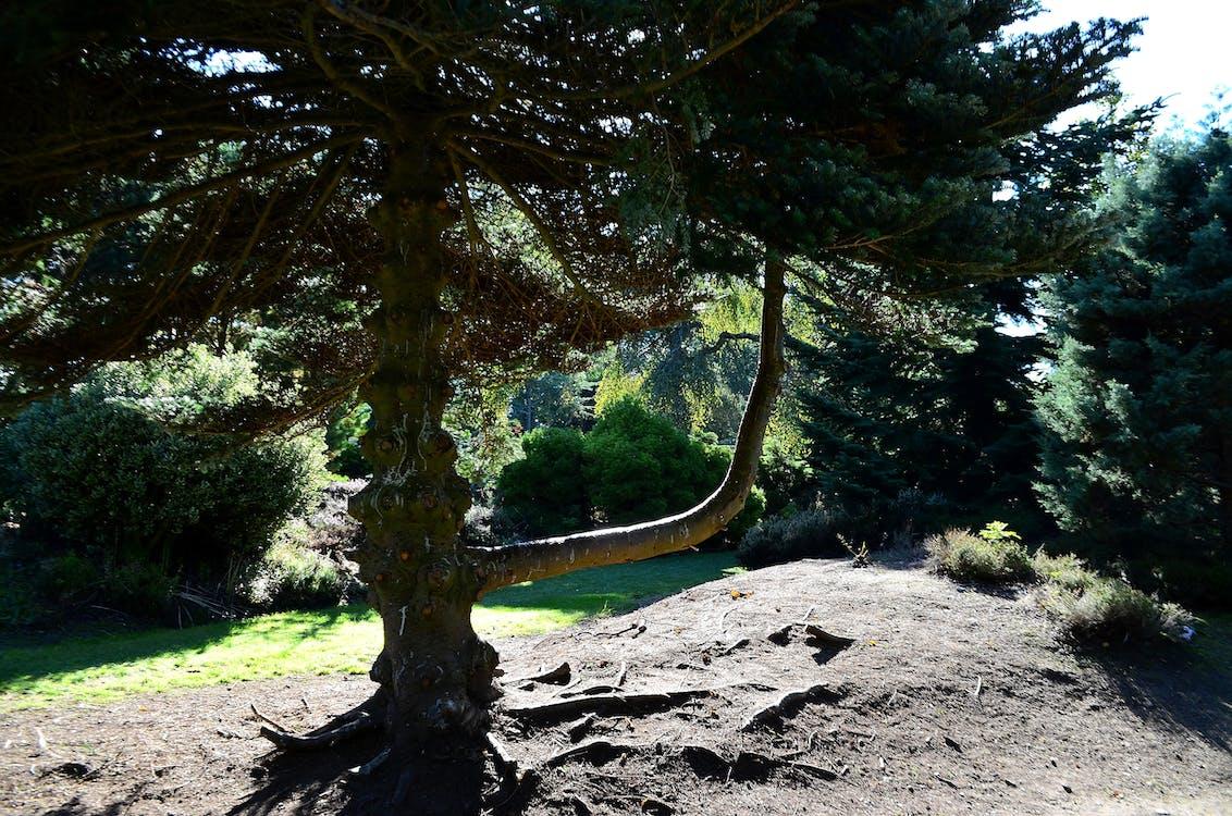 Free stock photo of green trees