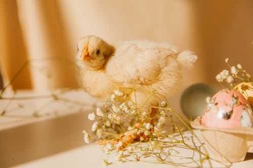 A Chick Near Flowers