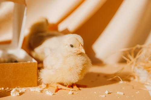 Fotos de stock gratuitas de animal, caja, chica