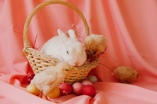 White Rabbit on Brown Woven Basket