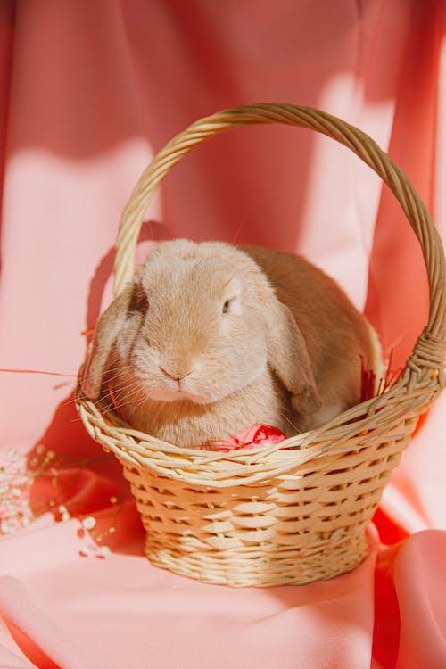Immagine gratuita di animale, Buona Pasqua, carino