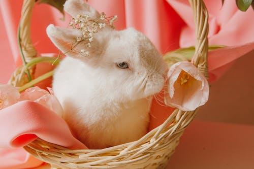 Foto stok gratis bagus, berwarna merah muda, binatang