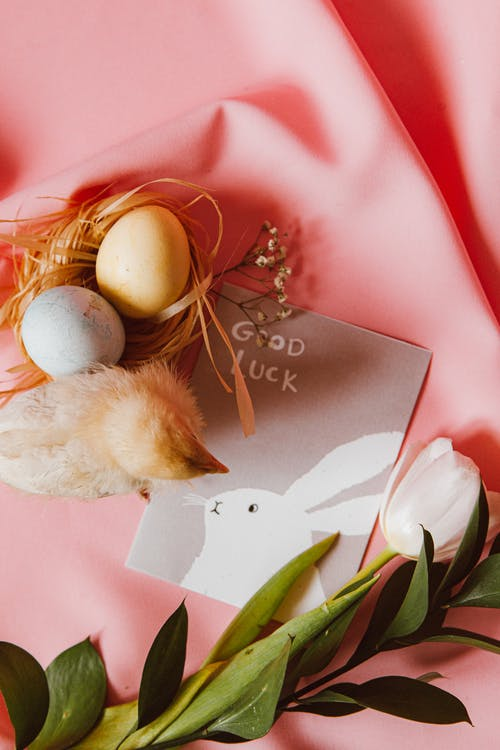 A Chick and Eggs With Easter Bunny Greeting Card On Pink Background