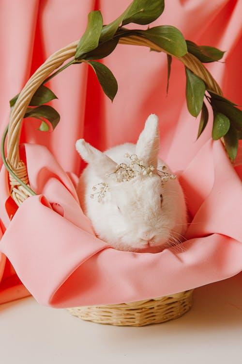 Безкоштовне стокове фото на тему «Великдень, Великодній заєць, гніздо»