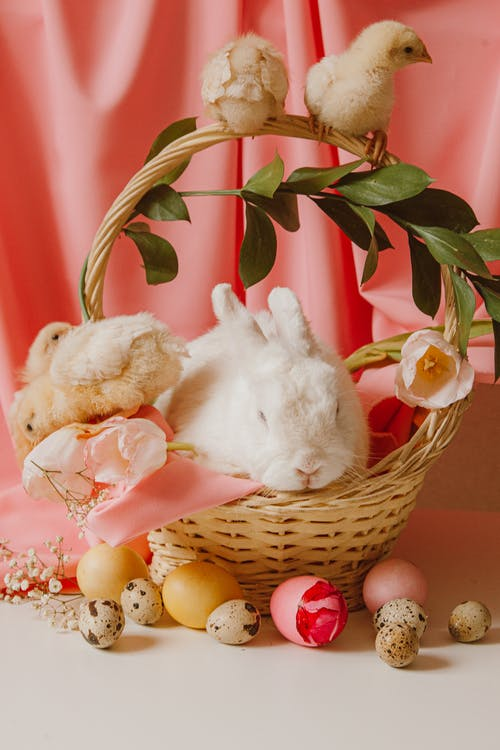 White Rabbit on Brown Wicker Basket