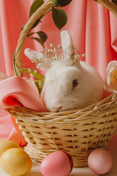 A Bunny In A Basket Beside Easter Eggs