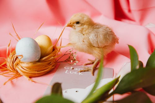 A Bird's Nestick With Two Colored Eggs Beside A Chick