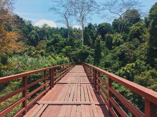 Gratis arkivbilde med bro, dagslys, gangbro, himmel