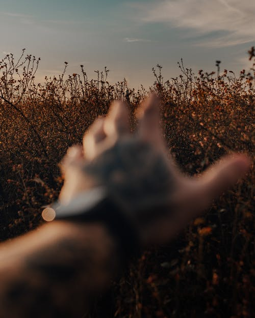 Crop anonymous male outstretching hand towards lush thicket growing in peaceful sunny nature