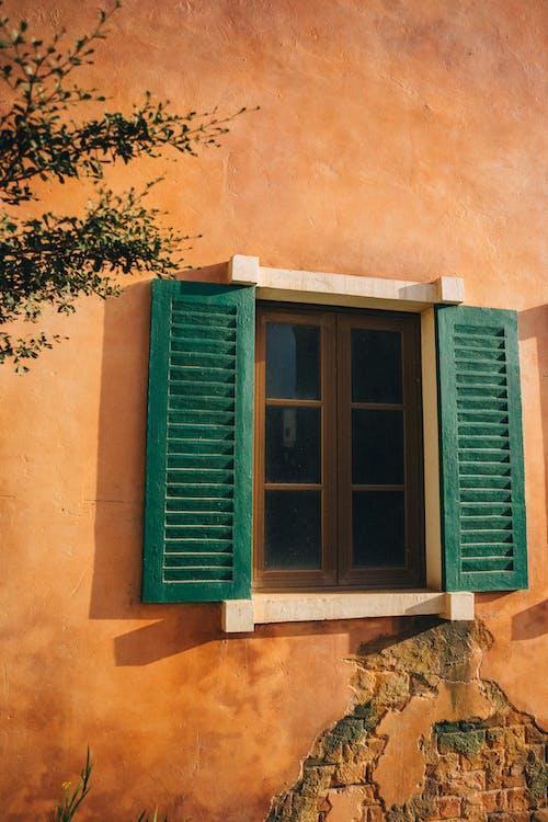 Foto stok gratis Daun-daun, dedaunan, dinding beton