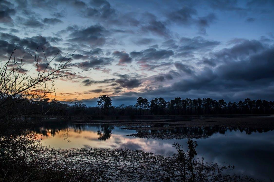 foresta, lakeside, tramonto