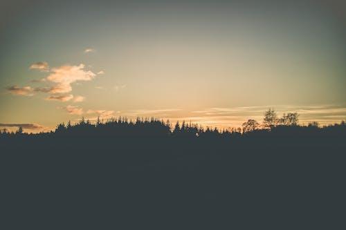 Fotos de stock gratuitas de al aire libre, amanecer, arboles, cielo