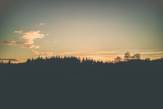 Photo of Forest Trees Under Calm Sky