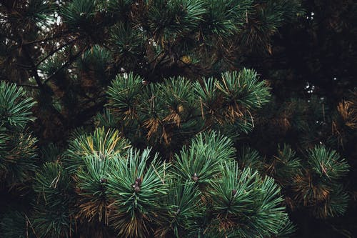 Free stock photo of green, outdoor, trees, wilderness