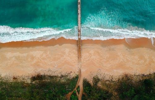 Immagine gratuita di acqua, alberi, estate, idilliaco