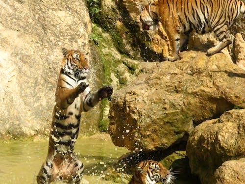 Free stock photo of thailand, wild animals