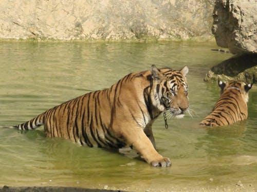 Free stock photo of pond, thailand, wild animals