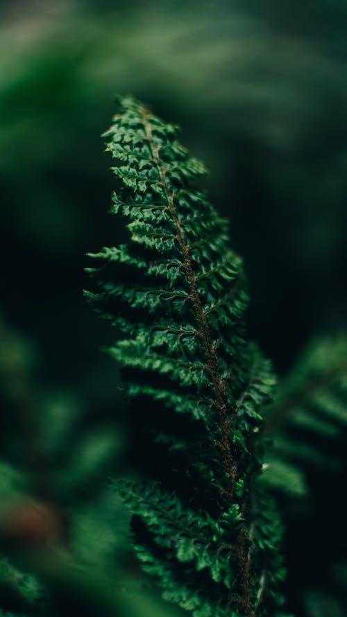 Безкоштовне стокове фото на тему «вічнозелений, гілка з листям, делікатний»