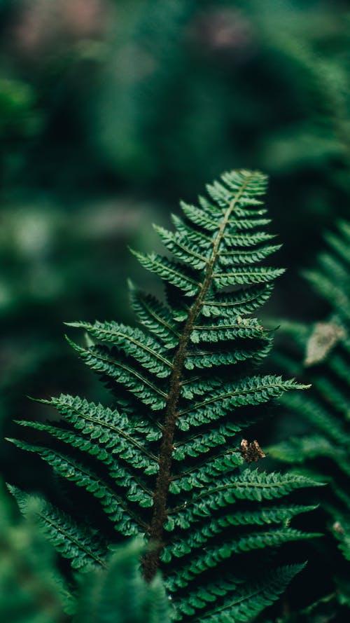 Безкоштовне стокове фото на тему «bracken, біологія, гілка з листям»