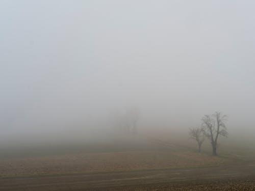 Free stock photo of agrarfläche, baum, feld