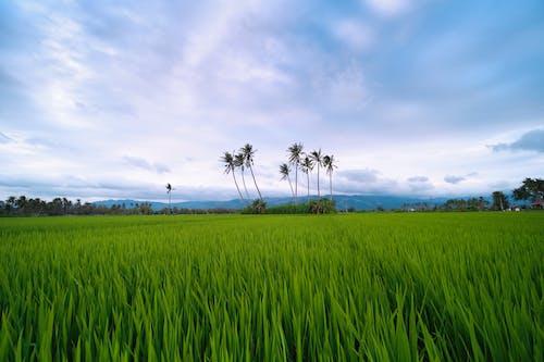 Kostenloses Stock Foto zu dorf, grün, landwirtschaftlich