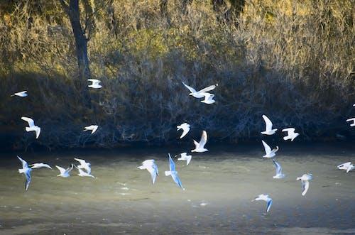 Immagine gratuita di animale, natura, oiseau, riva del fiume