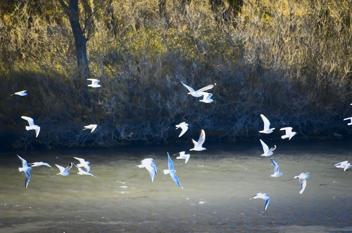 Free stock photo of animal, flight, nature