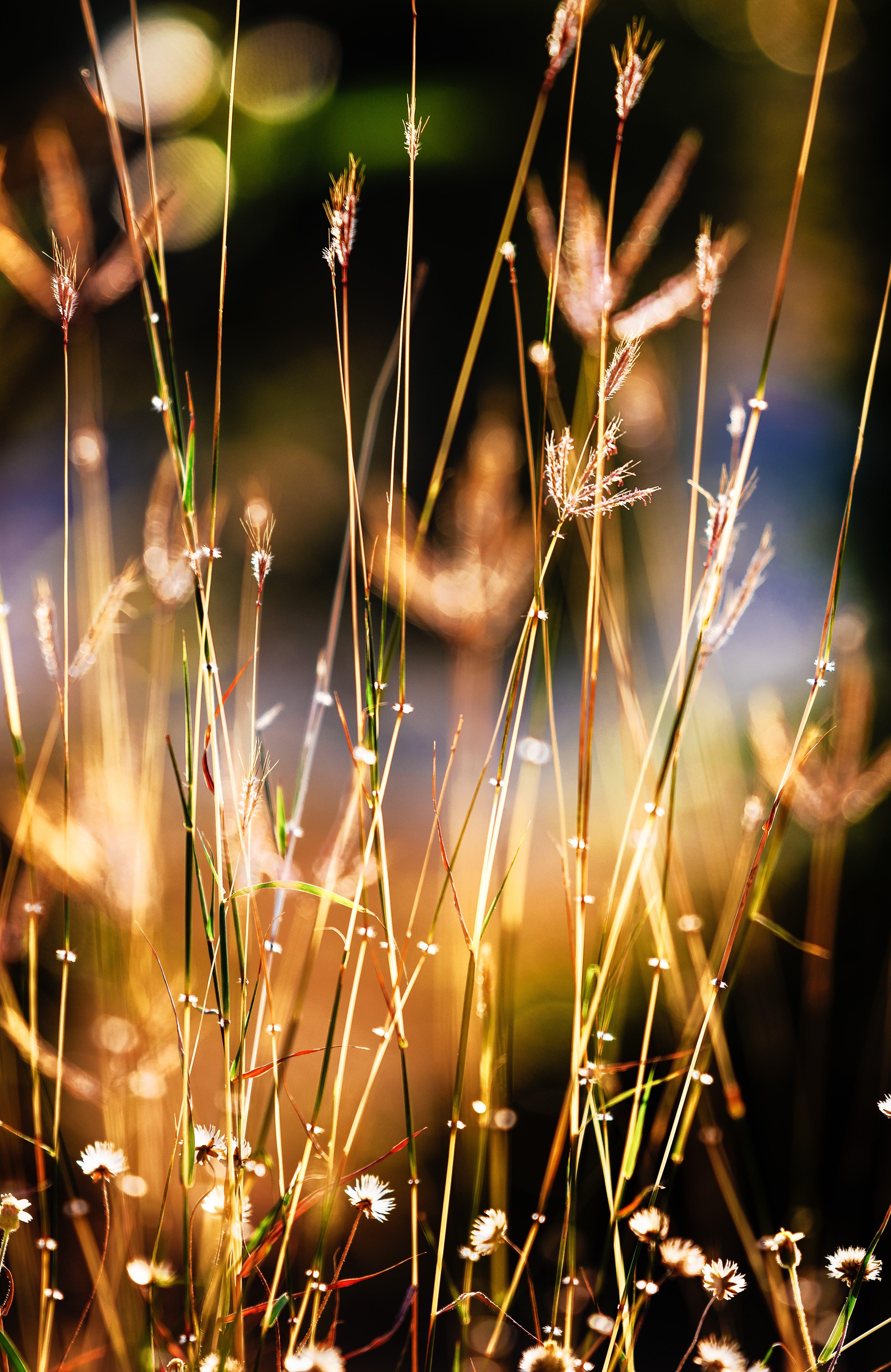 คลังภาพถ่ายฟรี ของ การเจริญเติบโต, ความชัดลึก, ดอกไม้, ทุ่งหญ้าแห้ง