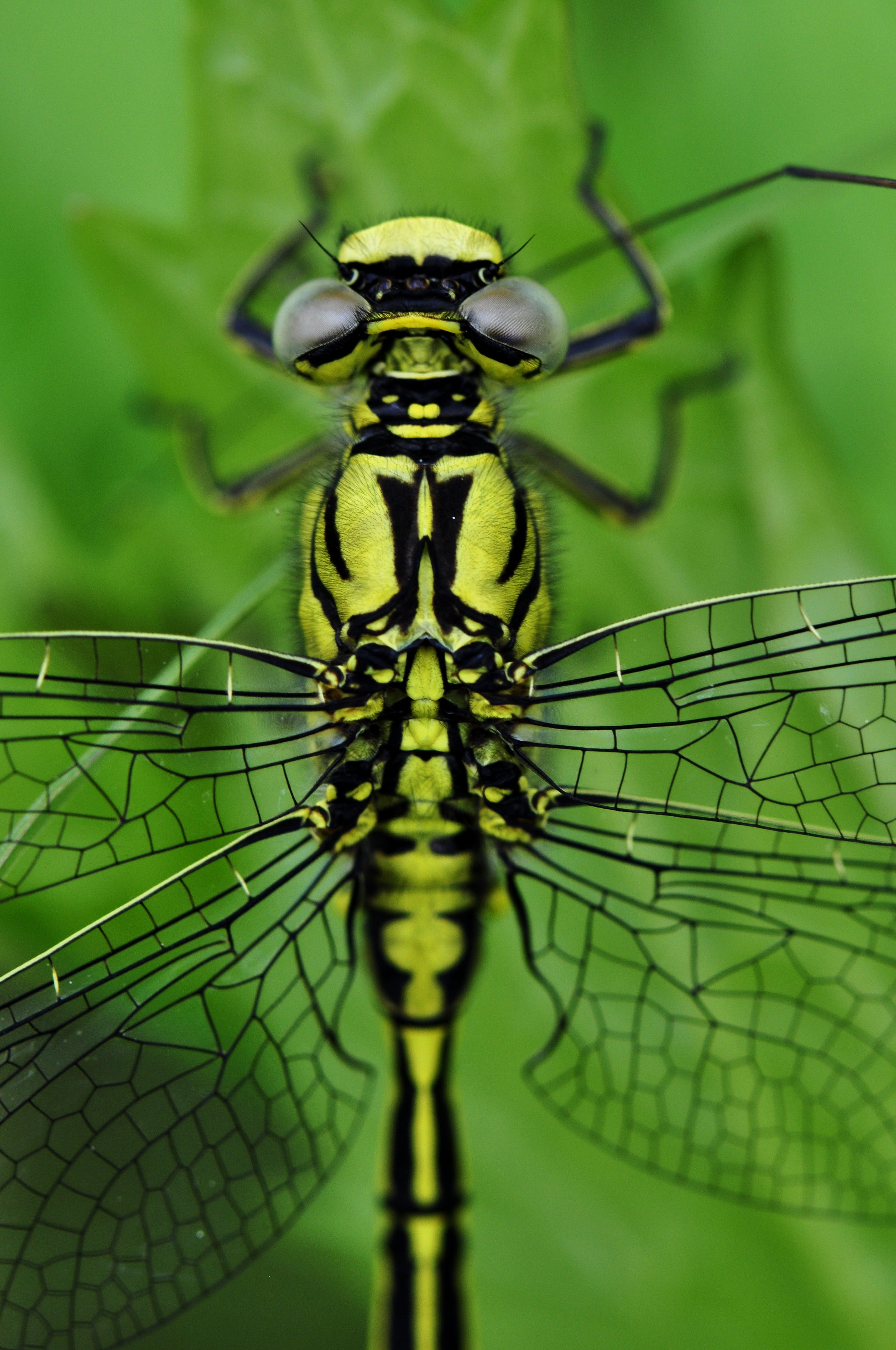 Yellow Black Dragonfly