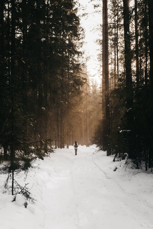 Person walking on snowy path between coniferous trees