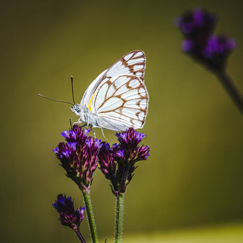 White and Brown Butterfly Perched on Purple Flower in Close Up Photography